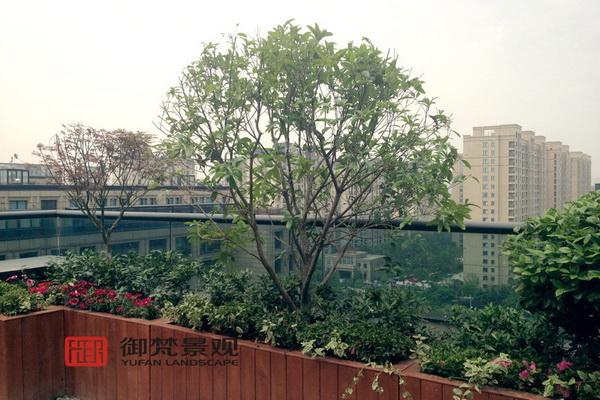 曲折造型的防腐木花箱上配植了高低错落的花灌木和小乔木.
